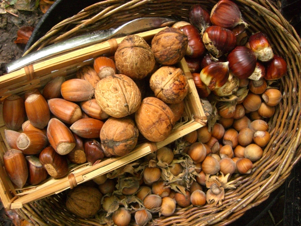 nuts-about-autumn