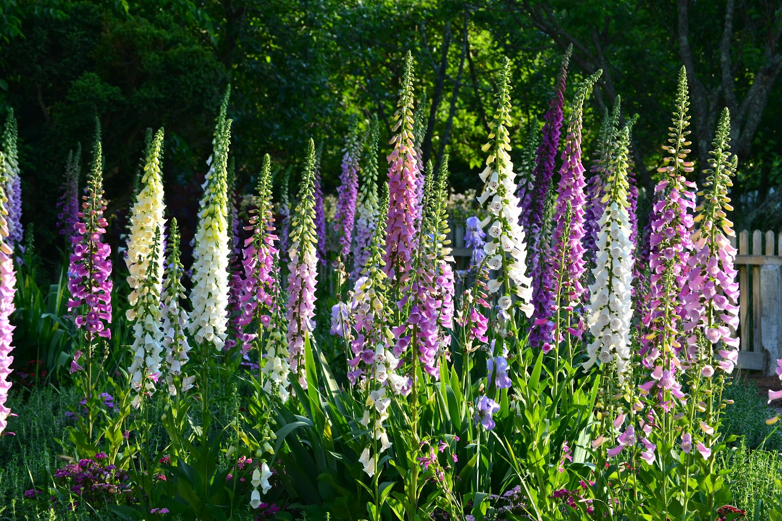 """This Season's Top 5 Plants Your Garden Needs – Because """"out""""doors is so very"""